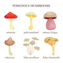 Set of poisonous mushroom.