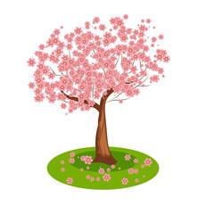 Tree sakura. Isolated.