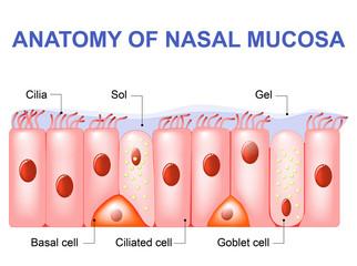 Nasal mucosa cells