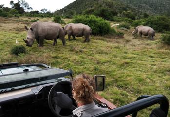 Rhino tracking