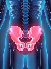 3D illustration of Pelvis, medical concept.