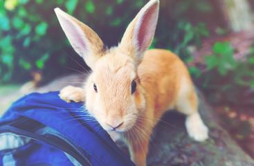 Curious wild rabbit