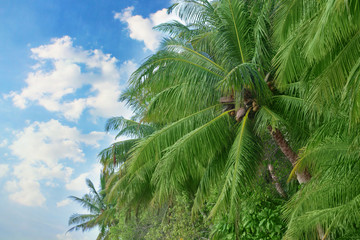 Tropical green palm trees.