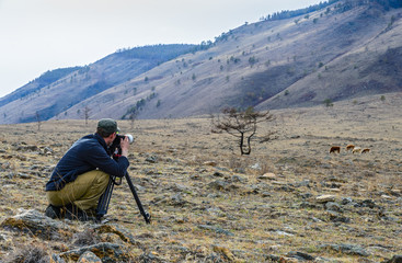 photographer photographing the tree and cows in mountainous terrain