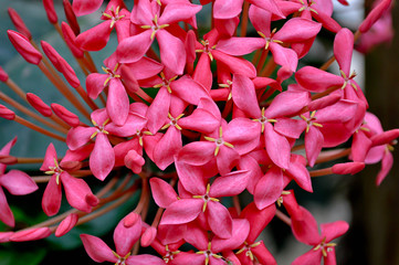 Search photos pink spike flower pink spike flower mightylinksfo Image collections