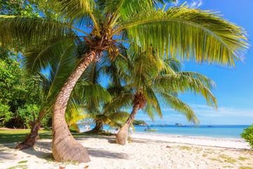 Morning tropical beach at Praslin island, Seychelles. Fashion travel and tropical beach concept. Wall mural