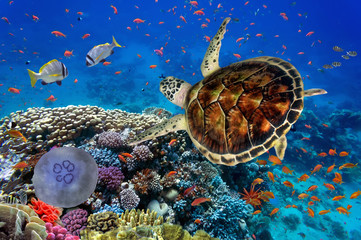 Photo sur cadre textile Tortue colorful coral reef with many fishes and sea turtle