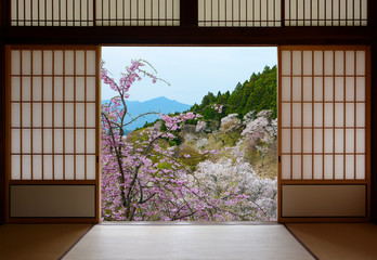 Japanese sliding doors and beautiful landscape of cherry trees in spring