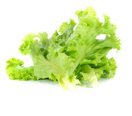 Lettuce leaf on white back ground