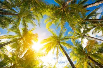 Palm trees against sunny sky