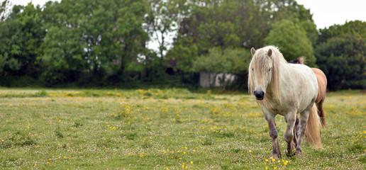 chevaux dans une pâture