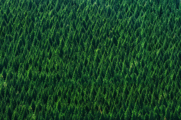 background of forest with trees pattern