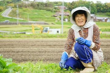 Senior woman growing organic fresh vegetables in the garden / 畑で野菜作りをする高齢者 収穫 栽培 野菜 おばあさん おじいさん 農業 趣味