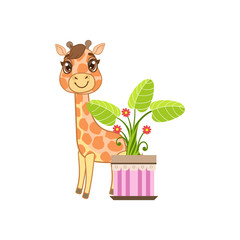 Giraffe Behind The Flower In Pot