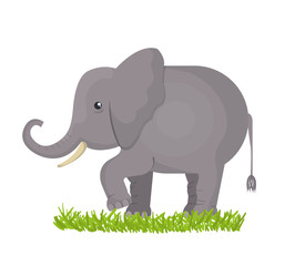 elephant isolated design