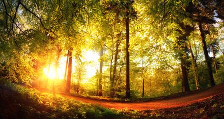 Wall Mural - Bäume von der untergehenden Sonne in goldenes Licht getaucht
