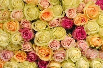 Roses. Roses background. Fresh roses.