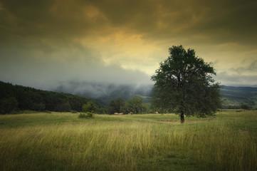 tree on meadow on rainy weather