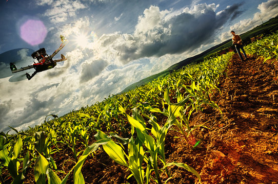 Surveying Cornfield by a Drone