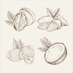 Vector set of nuts in woodcut style: coconut, almond, walnut.