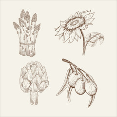Set of vegetables: sunflower, olive, asparagus, artichoke in woodcut style.