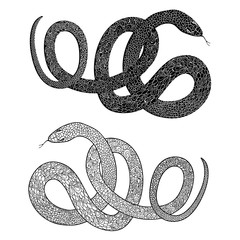 Snake set. Engraved hand drawn vector illustraction of ornamenta