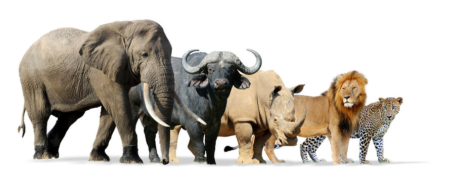 Big five game isolated on white