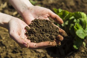 Black soil in woman hands