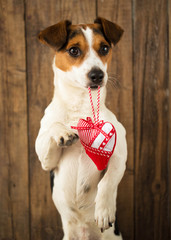 A dog with a toy in the form of heart in his mouth posing for ca