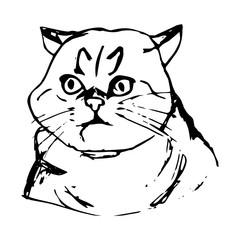 Cat surprised face