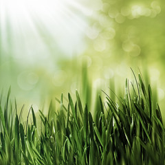 Beauty natural backgrounds with green grass and natural bokeh