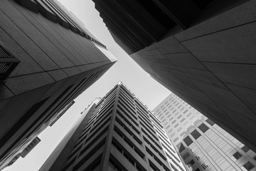 Adelaide skyscrapers in black and white