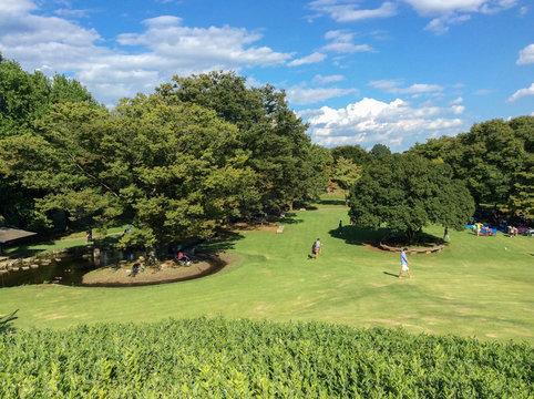 自然あふれる緑の公園風景