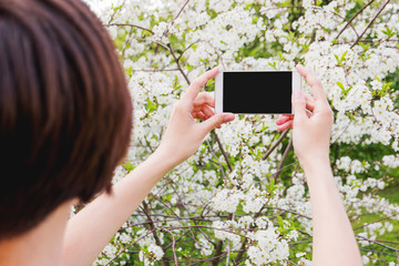 Woman takes photos of cherry blossom on a smartphone. Spring natural background, good for mock up.