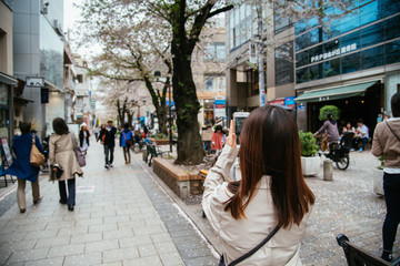 Girl take photograph of cherry blossom along the street