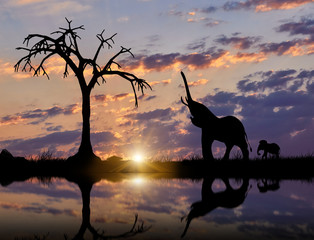 Silhouette of Elephant and cub near the river
