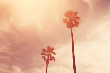 Palm trees against sky. retro style image.