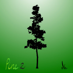 Pacific northwest pine old growth evergreen tree silhouette