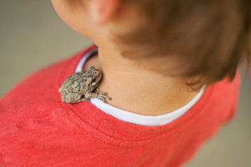 Toad sitting on boy's shoulder