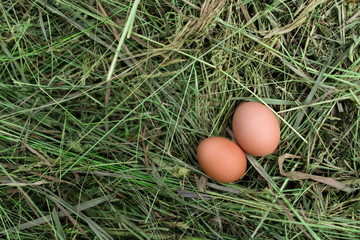 Chicken eggs in hay nest at outdoor
