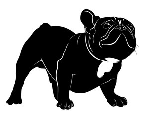 Dog Bulldog. The dog breed bulldog.Dog Bulldog black silhouette vector isolated on white background.