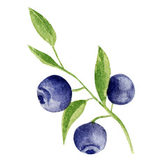 hand painted watercolor mockup clipart template of blueberry
