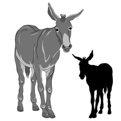 donkey  black silhouette realistic gray