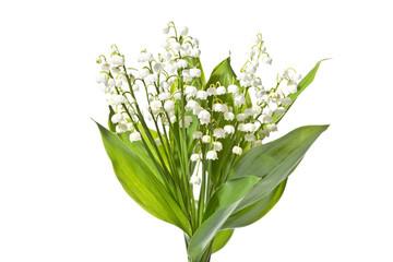 Obraz Bukiet pachnących konwalii na białym tle. Kwitnące świeże konwalie  wyizolowane na białym tle. - fototapety do salonu