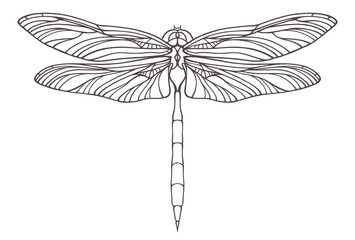 Hand drawn dragonfly illustration isolated