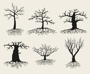 Wall Mural - Vector bare tree silhouettes with roots