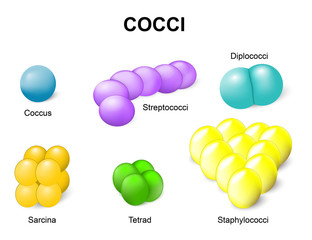 Types of bacteria. cocci