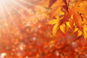 秋 美しい紅葉