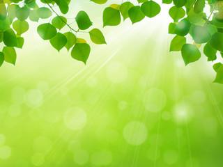 新緑の季節 若葉と光