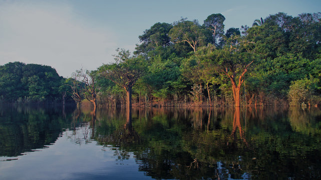 River and rain forest at Amazonas, Brazil